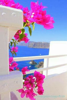 a peek of the Aegean though bougainvillea in Greece