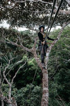 Cecilia Chavana-Bryant remote sensing research Peru 2011 Remote Sensing, Amazon Rainforest, Environmental Science, Ecology, Bald Eagle, Canopy, Documentaries, Soft Light, Peru