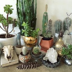 Plant and crystal decor
