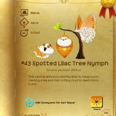 Maua set - Spotted Lilac Tree Nymph