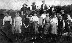 Tattie pickers at Perth. (1900's)
