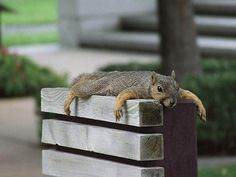 Just taking a rest....