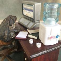 Woman Keeps Photographing Her Toad Doing Human-Like Things In Her Dollhouse And People Are Loving The Pics And The Captions Funny Frogs, Cute Frogs, Les Reptiles, Reptiles And Amphibians, Sapo Meme, Frog Pictures, Animal Pictures, Funny Animals, Cute Animals