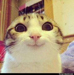 Une jolie bouille de chat - Cat cutest thing ever