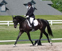Filligree - Stunning 2008 Hanoverian mare with quality bloodlines and schooling all 2nd level movements. Successful show record at Training level. Workmanlike attitude and Amateur safe. Spent two months in Wellington and handled the busy environment perfectly. Excellent German Verband scores! $49,000