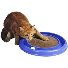 Bergan Turboscratcher Cat Toy - all my cats have loved this toy.
