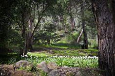 Photo taken by Lorraine Sullivan's Photography Perth Western Australia, South Australia, Tasmania, Lorraine, Things To Do, Wedding Photos, Landscapes, Wedding Photography, Plants