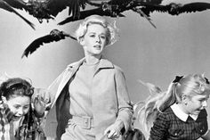 SKIP – Das Kinomagazin / Die Vögel