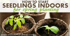 How to Start Seedlings Indoors for spring planting - Weed'em & Reap