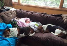 Nora Hall, who is five months old, had a devastating stroke nearly a month ago and had to be put in a coma, and these two family basset hounds have refused to leave her side. Amor Animal, Bassett Hound, Kids Pages, Dog Rules, Family Dogs, Puppy Love, Animal Pictures, Best Friends, Puppies