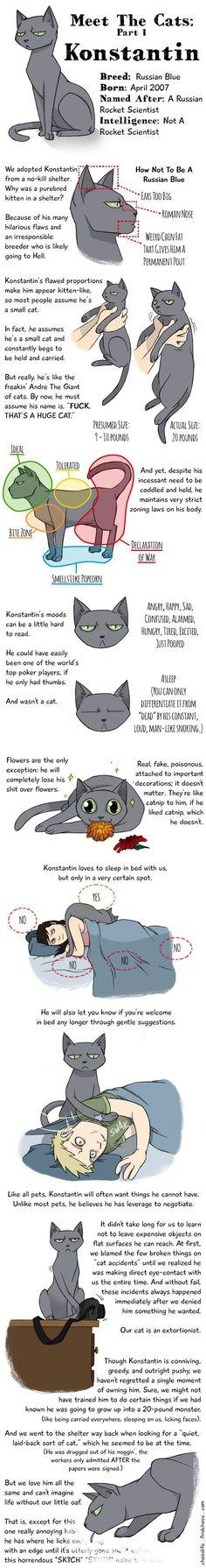 Meet Konstantin - Chaos Life Funny Weird cat, Russian Blue