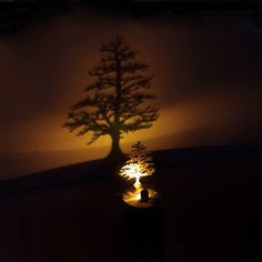 LED Shadow Projector - Pine – GoAmiroo Store