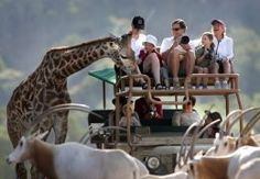 Safari West!  Experience an African Safari in the heart of the Wine Country.