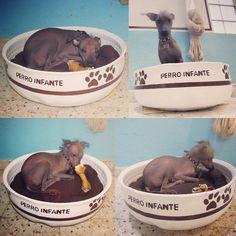 Cama para mascotas con llanta reciclada muebles facil de - Muebles para mascotas ...