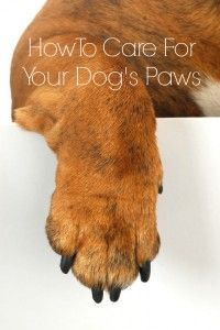 How to Care for Your Dog's Paws #dog grooming #Cowboy Magic