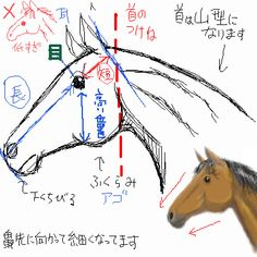 Basic Drawing, Body Drawing, Furry Drawing, Drawing Tips, Drawing Sketches, Painting & Drawing, Horse Drawings, Animal Drawings, Animation Reference