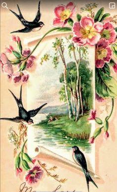 Hugh čierne vtáky