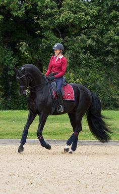 ✨✨✨ #equestrian #equestrianstockholm #horse #equestrianperformance