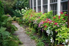 Persian Queen geraniums, petunias, and sweet potato vine