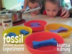 """(uses Epsom salt)How to make """"fossil"""" sponges . explains the concept of permineralization in fossil creation. 4th Grade Science, Kindergarten Science, Science Fair, Summer Science, Science For Kids, Earth Science, Science Tools, Science Activities, Homeschool Science Curriculum"""
