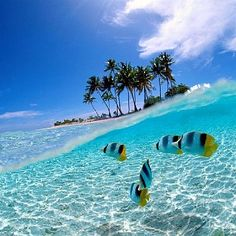 wakatobi island   - Explore the World with Travel Nerd Nici, one Country at a Time. http://www.TravelNerdNici.com