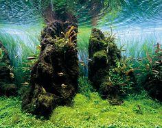 by Takashi Amano, ADA Nature Aquarium Calendar 2013 www.facebook.com/nature.aquarium.setup