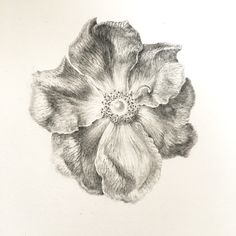 drawing of Rose Sketchbook Drawings, Graphite Drawings, Pencil Drawings, Botanical Drawings, Botanical Illustration, Botanical Prints, Nature Drawing, Plant Drawing, Plant Painting