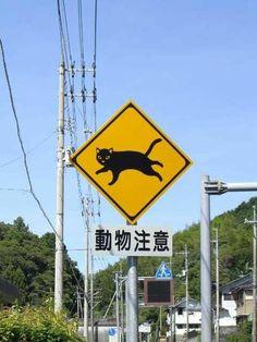 Cat Crossing, Japan. https://www.facebook.com/CultureBeyondTheBound/?fref=photo