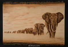 Elephant Herd - woodburning by brandojones