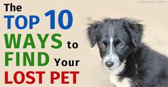 sites healthypets archive travel with petsaspx
