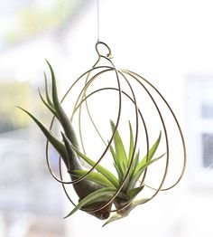 Brass Coil Air Plant Ornament by Elaine B Jewelry on Scoutmob