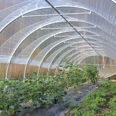 There is no more hurdle to know how to do greenhouse gardening? Greenhouse gardening is only possible in the best climatic conditions and weather variables. Greenhouse Film, Outdoor Greenhouse, Cheap Greenhouse, Backyard Greenhouse, Greenhouse Wedding, Greenhouse Plans, Greenhouse Gases, Tunnel Greenhouse, Pallet Greenhouse