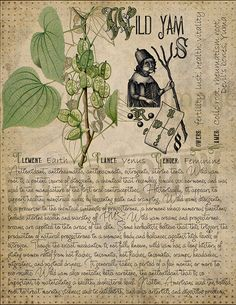 Magic plant knowledge has a long history and has a place in the modern witches Book of Shadows. Book of Shadows page. Plant Magic, Magic Herbs, Herbal Magic, Magick, Witchcraft, Wiccan, Wild Yam, Grimoire Book, Witch Herbs