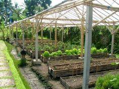 Organic garden @ Swasti Eco Cottage, Bali