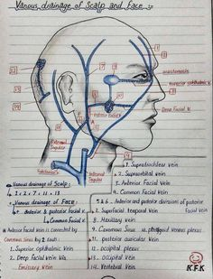 Sketches of Maxillary Artery, Sphenopalatine Ganglion and Venous drainage of Scalp and Face Dental Assistant Study, Dental Hygiene School, Dental Hygienist, Dental World, Dental Life, Dental Anatomy, Medical Anatomy, Anatomy Head, Nerve Anatomy