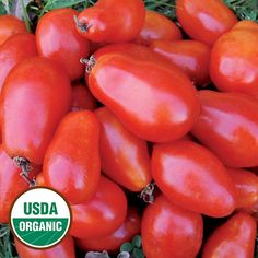 Martino's Roma Organic Tomato - Seed Savers Exchange