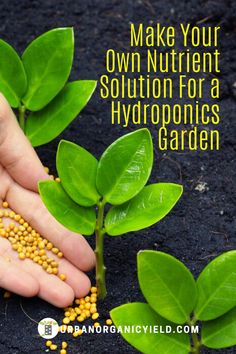 Understand how to make your own nutrient solution for your hydroponics growing system. You need to know the science behind. Here we go behind the science and show you how to make your own fertilizer. Hydroponic Nutrient Solution, Organic Hydroponics, Homemade Hydroponics, Indoor Hydroponic Gardening, Hydroponic Vegetables, Hydroponic Grow Systems, Hydroponic Farming, Hydroponic Growing, Hydroponics System