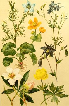 Plate of botanical illustrationsfrom 'Onze Flora'Published                     1900                     by                     W.J. Thiemearchive.org