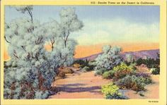vintage illustration of desert - Google Search