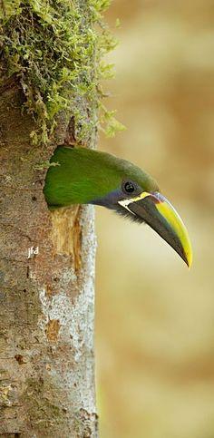 Pretty Birds, Beautiful Birds, Animals Beautiful, Cute Animals, All Birds, Love Birds, Weird Creatures, Bird Pictures, Exotic Birds