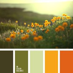 Color Palette Color of orange flowers muted shades of green the colors of summer meadows are embodied in this palette. Pastel light olive adds tenderness to quite ene The post Color Palette appeared first on Easy flowers. Orange Color Palettes, Colour Pallette, Colour Schemes, Color Patterns, Color Combos, Summer Colour Palette, Orange Palette, Good Color Combinations, Summer Colors