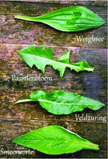 Edible Plants, Edible Garden, Farm Layout, Wild Edibles, Greens Recipe, Green Garden, Permaculture, Botany, Vegetable Garden