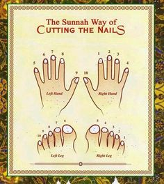 """The terms """"Sunnah"""" and """"Ḥadīth"""" are often used interchangeably. This use is inaccurate.  """"Sunnah"""" denotes what the Prophet said, did, approved, and disapproved of, explicitly or implicitly. """"Ḥadīth,"""" on the other hand, refers to the reports of such narrations."""