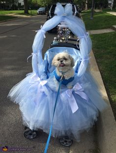 Abby: Ellie is a 4 year old Shih Tzu. She loves to dress up in costumes, and loves to make people smile with her creative costumes! Ellie is riding in her...