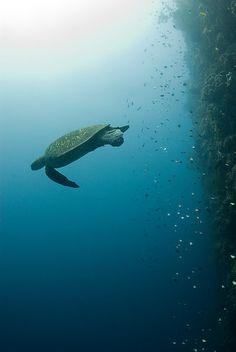 underwater wall at bunaken island