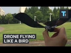 Tech Insider: This drone looks and flies just like a bird