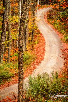 Winding Road Through the Woods, Owl's Head Lookout,  Groton State Forest, Vermont
