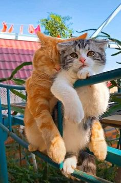 Cats And Kittens Funny Humor Animal Captions, Funny Animals With Captions, Cute Funny Animals, Cute Baby Animals, Animals And Pets, Funny Cats, Funny Captions, Funny Humor, Baby Captions