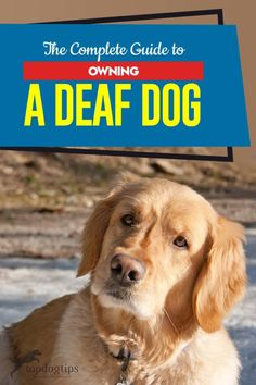 The Complete Guide To Owning A Deaf Dog Deaf Dog Deaf Dog