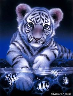 The Tiger Full Drill Animal Diamond Painting kit is beautiful baby tiger with blue eyes kit you need to DIY. Enjoy paint with diamonds. Create popular diamond painting wall decor in your free time. Tiger Fish, Pet Tiger, Tiger Art, Tiger Cubs, Bear Cubs, Bengal Tiger, Tiger Pictures, Animal Pictures, Beautiful Cats
